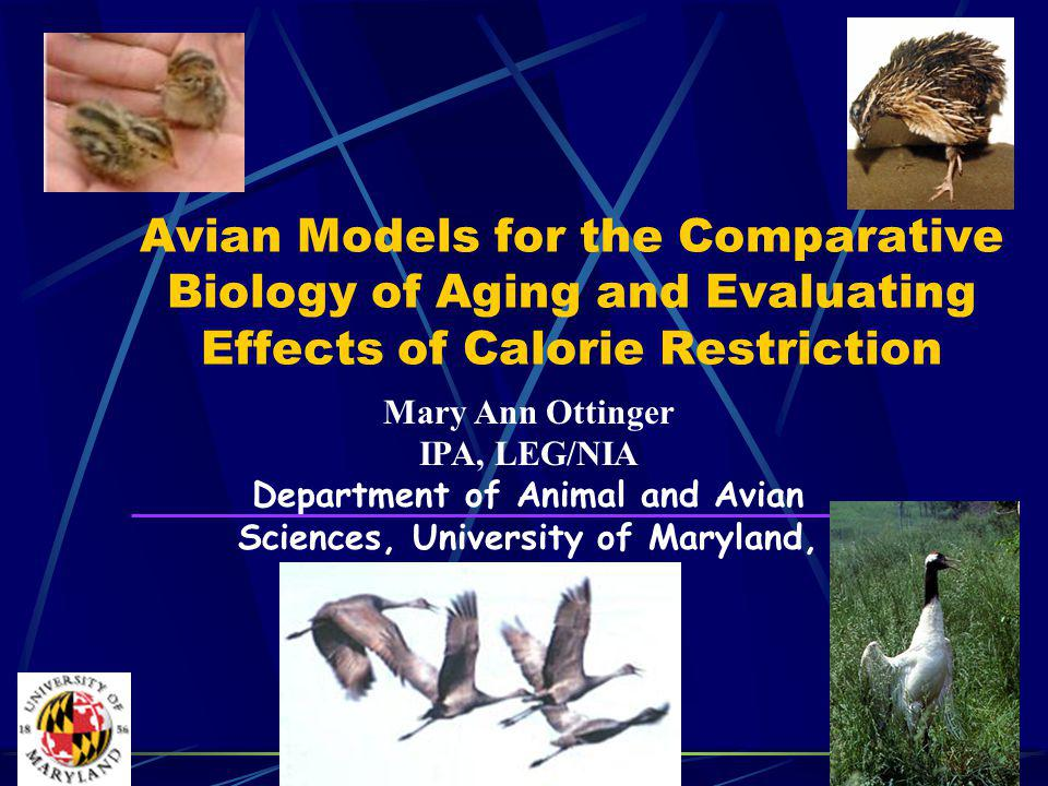 Mary Ann Ottinger IPA, LEG/NIA Department of Animal and Avian Sciences, University of Maryland, College Park, MD Avian Models for the Comparative Biology of Aging and Evaluating Effects of Calorie Restriction
