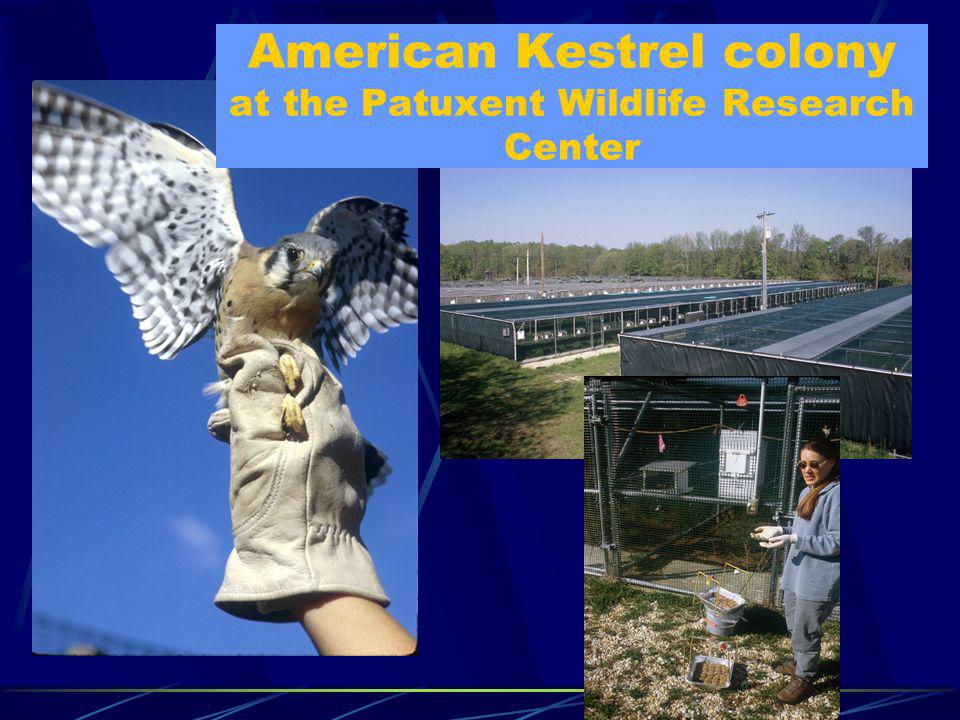 American Kestrel colony at the Patuxent Wildlife Research Center
