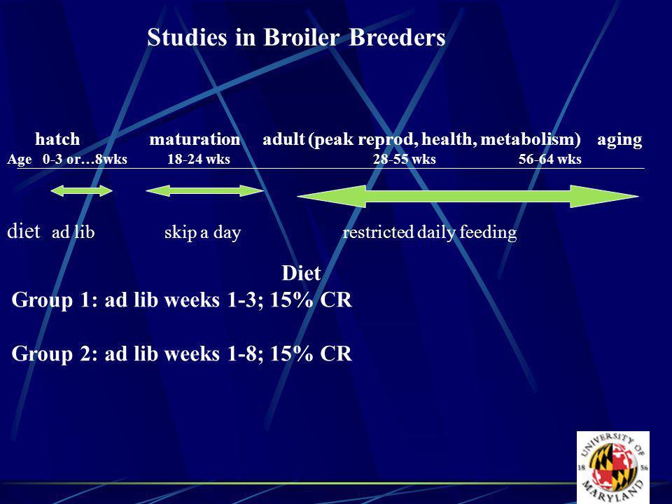 Studies in Broiler Breeders hatch maturation adult (peak reprod, health, metabolism) aging Age 0-3 or…8wks 18-24 wks 28-55 wks 56-64 wks diet ad lib skip a dayrestricted daily feeding Diet Group 1: ad lib weeks 1-3; 15% CR Group 2: ad lib weeks 1-8; 15% CR