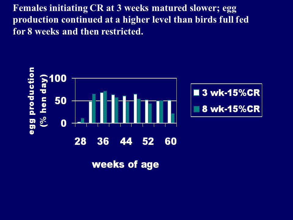 Females initiating CR at 3 weeks matured slower; egg production continued at a higher level than birds full fed for 8 weeks and then restricted.