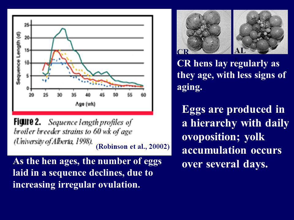 (Robinson et al., 20002) As the hen ages, the number of eggs laid in a sequence declines, due to increasing irregular ovulation.