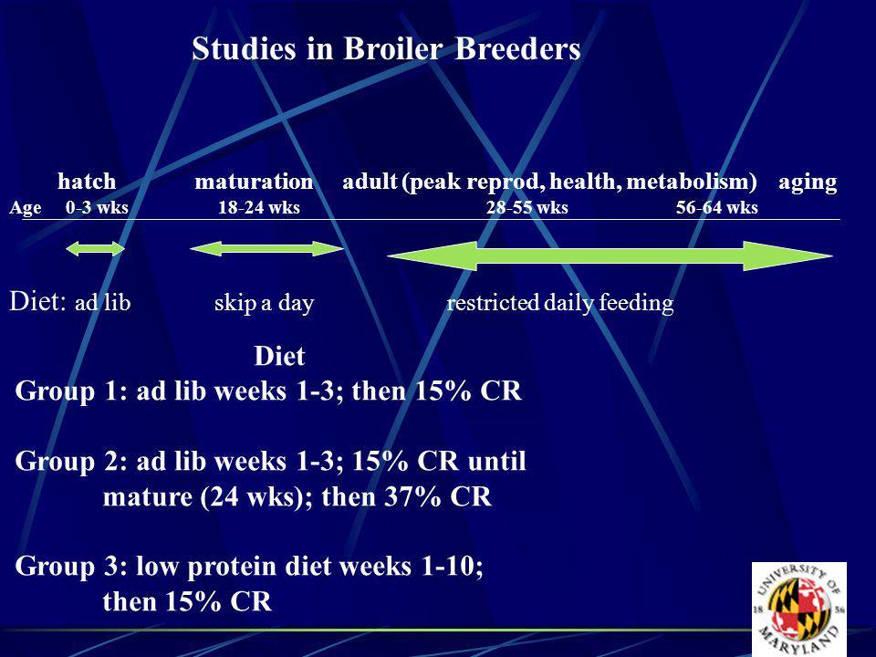 Studies in Broiler Breeders hatch maturation adult (peak reprod, health, metabolism) aging Age 0-3 wks 18-24 wks 28-55 wks 56-64 wks Diet: ad lib skip a dayrestricted daily feeding Diet Group 1: ad lib weeks 1-3; then 15% CR Group 2: ad lib weeks 1-3; 15% CR until mature (24 wks); then 37% CR Group 3: low protein diet weeks 1-10; then 15% CR