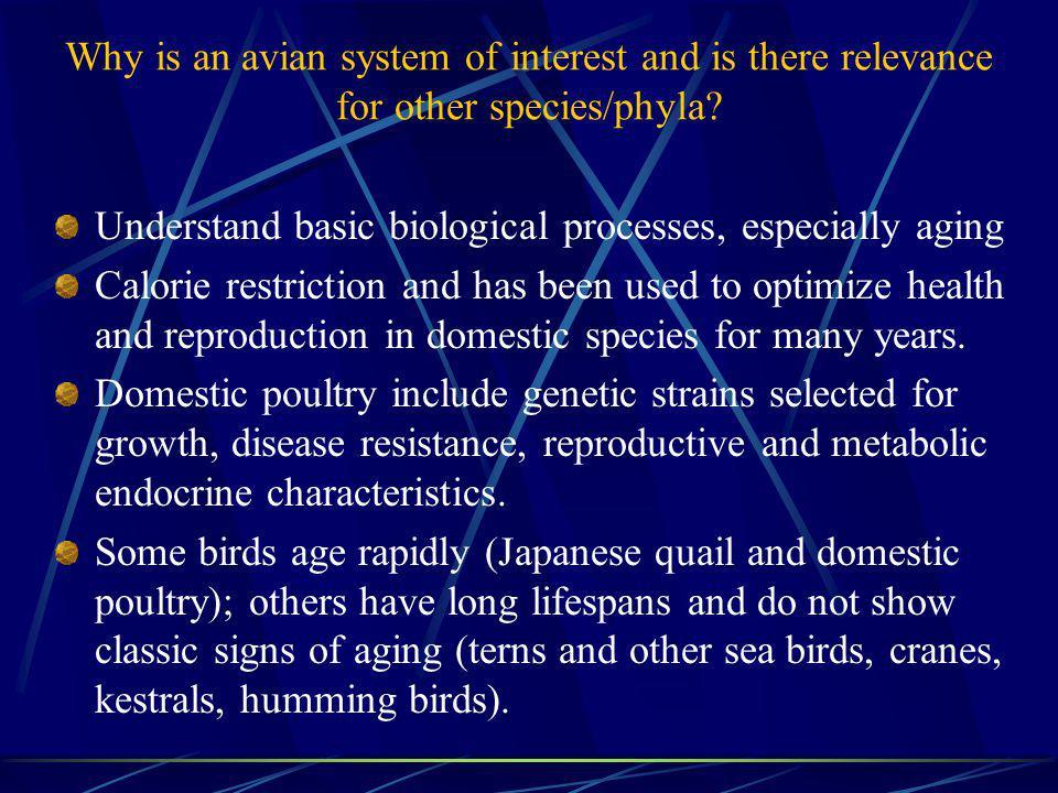 Do Avian Species Have Similar Lifetime Reproductive Patterns.