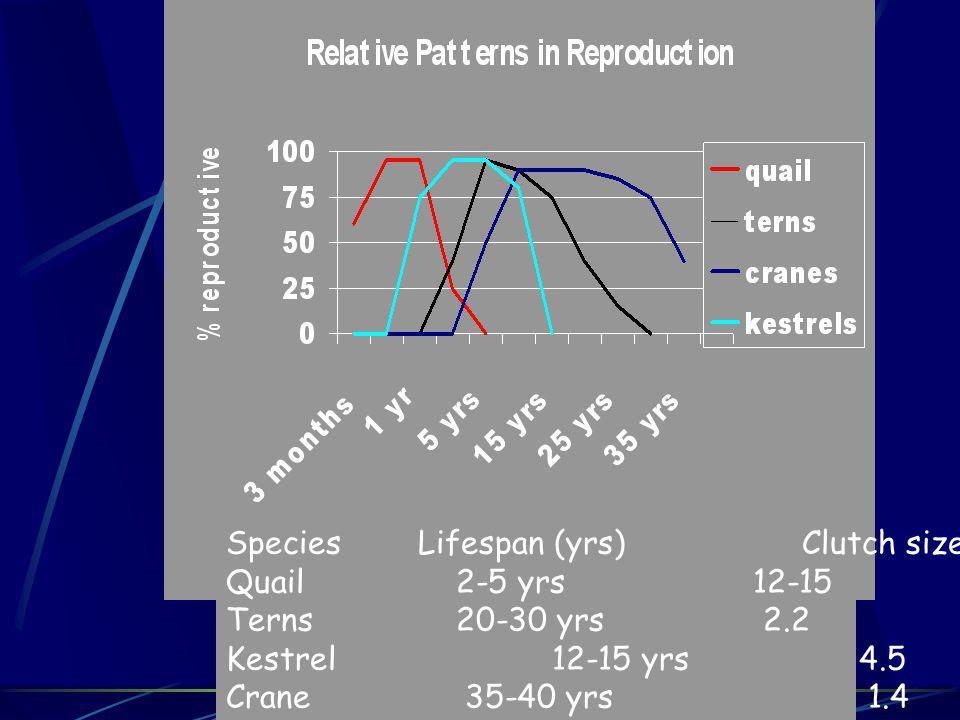 SpeciesLifespan (yrs)Clutch size Quail 2-5 yrs 12-15 Terns 20-30 yrs 2.2 Kestrel 12-15 yrs 4.5 Crane 35-40 yrs 1.4
