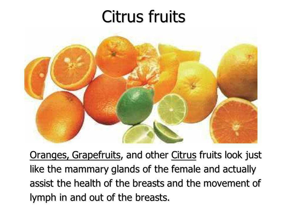 Citrus fruits Oranges, Grapefruits, and other Citrus fruits look just like the mammary glands of the female and actually assist the health of the breasts and the movement of lymph in and out of the breasts.