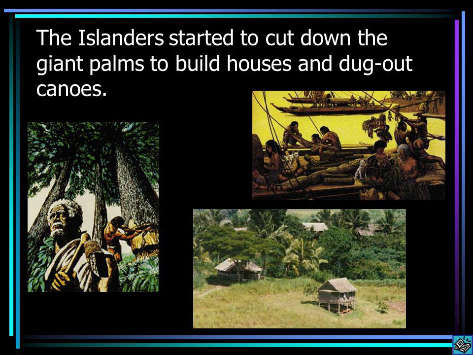 The Islanders started to cut down the giant palms to build houses and dug-out canoes.