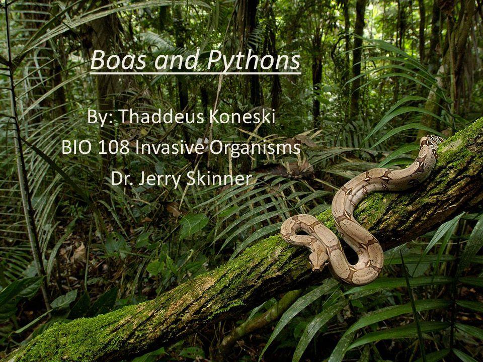 Boas and Pythons By: Thaddeus Koneski BIO 108 Invasive Organisms Dr. Jerry Skinner