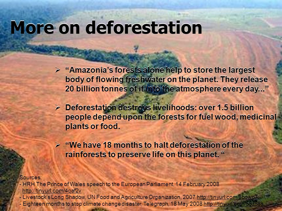 Amazonias forests alone help to store the largest body of flowing freshwater on the planet. They release 20 billion tonnes of it into the atmosphere e
