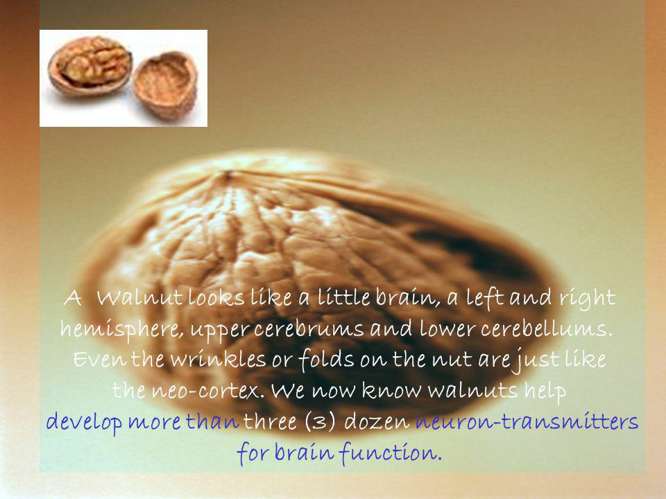 A Walnut looks like a little brain, a left and right hemisphere, upper cerebrums and lower cerebellums.