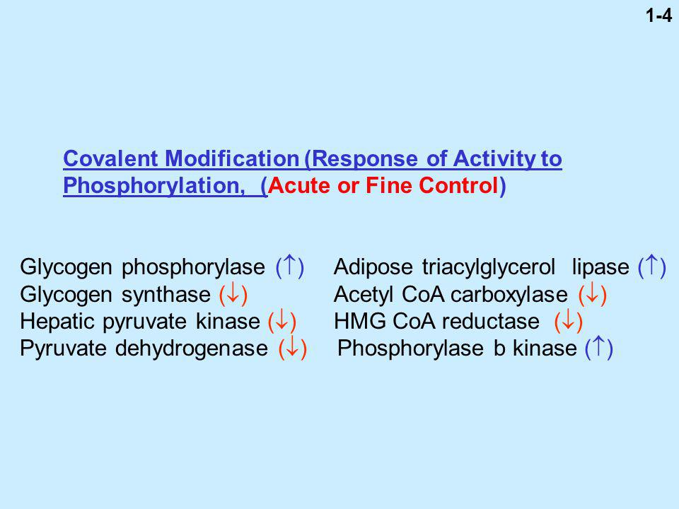 Covalent Modification (Response of Activity to Phosphorylation, (Acute or Fine Control) Glycogen phosphorylase ( ) Adipose triacylglycerol lipase ( ) Glycogen synthase ( ) Acetyl CoA carboxylase ( ) Hepatic pyruvate kinase ( ) HMG CoA reductase ( ) Pyruvate dehydrogenase ( ) Phosphorylase b kinase ( ) 1-4