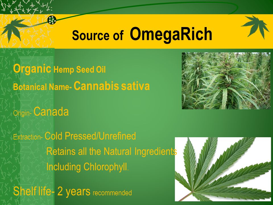 Source of OmegaRich Organic Hemp Seed Oil Botanical Name- Cannabis sativa Origin- Canada Extraction- Cold Pressed/Unrefined Retains all the Natural In