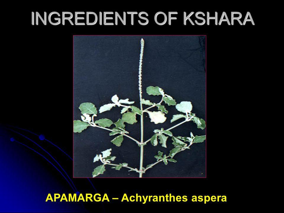 INGREDIENTS OF KSHARA APAMARGA – Achyranthes aspera