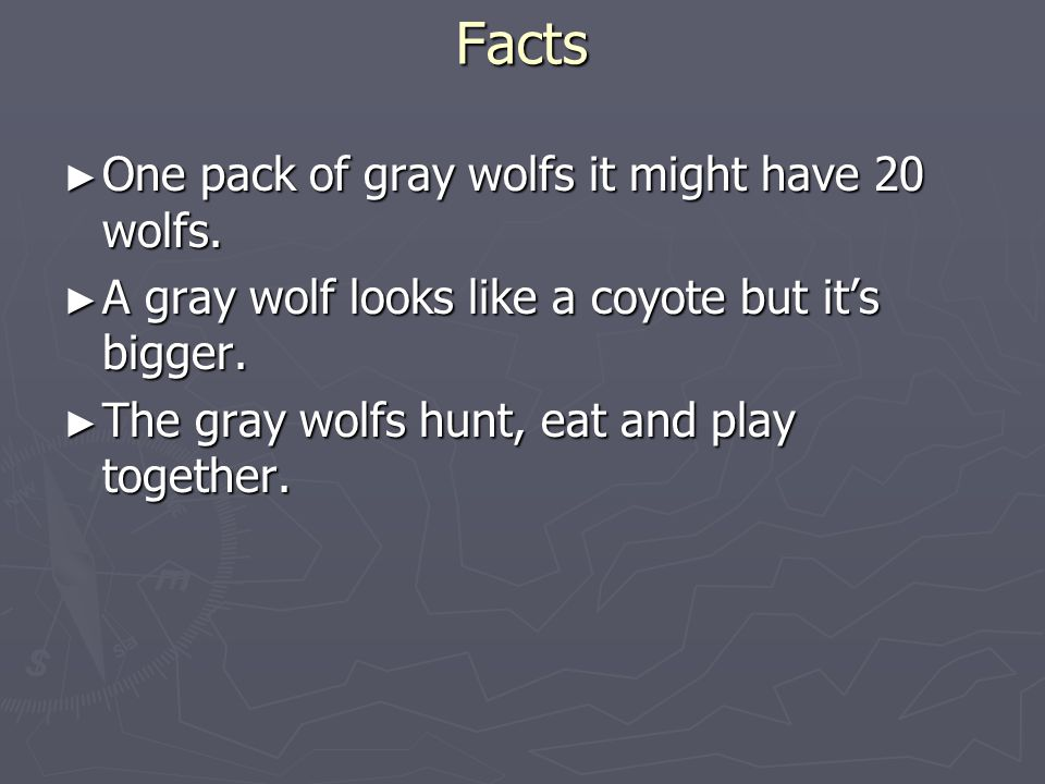 Facts One pack of gray wolfs it might have 20 wolfs.