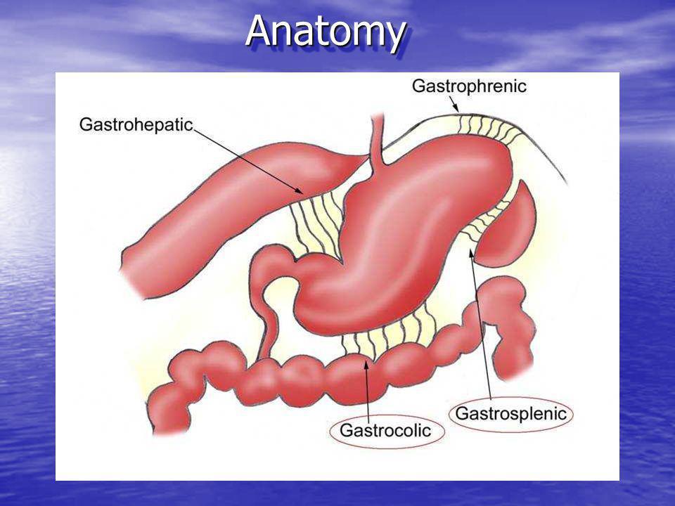 Anatomy Anatomy