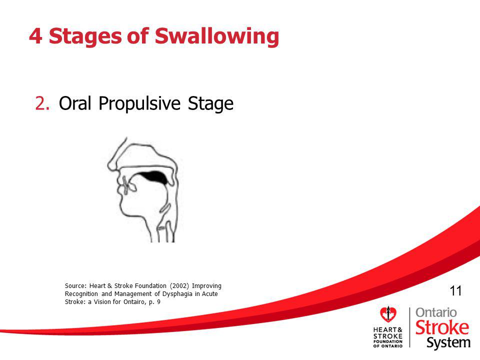 11 4 Stages of Swallowing 2.Oral Propulsive Stage Source: Heart & Stroke Foundation (2002) Improving Recognition and Management of Dysphagia in Acute
