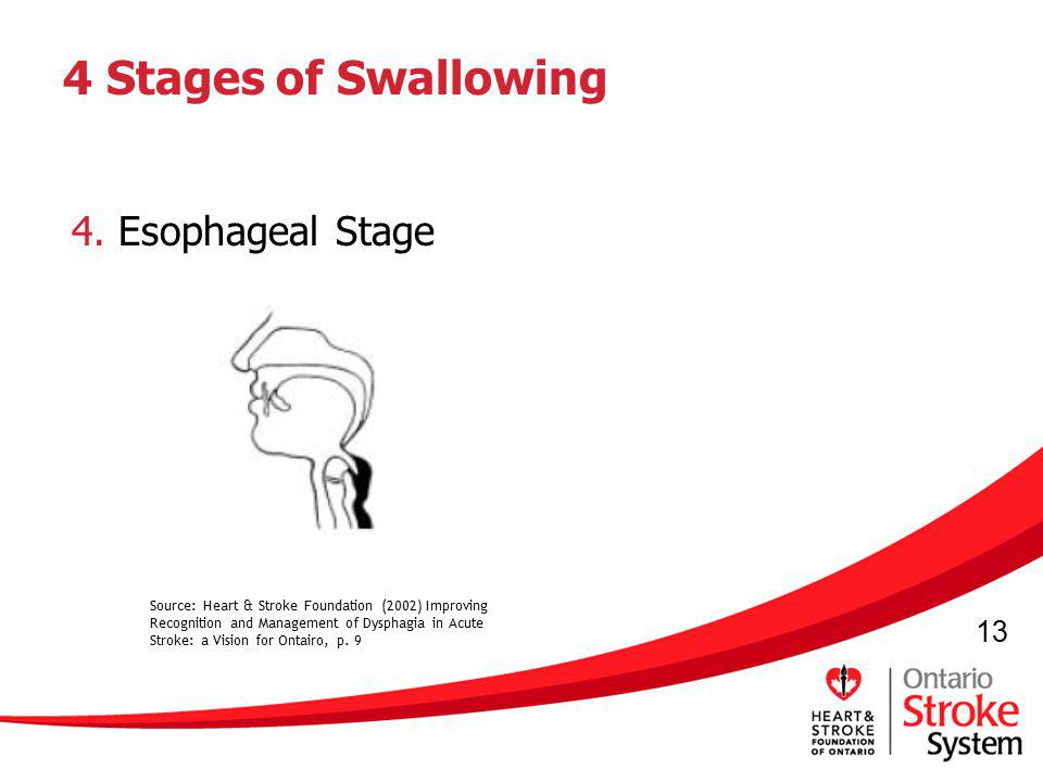 13 4 Stages of Swallowing 4. Esophageal Stage Source: Heart & Stroke Foundation (2002) Improving Recognition and Management of Dysphagia in Acute Stro