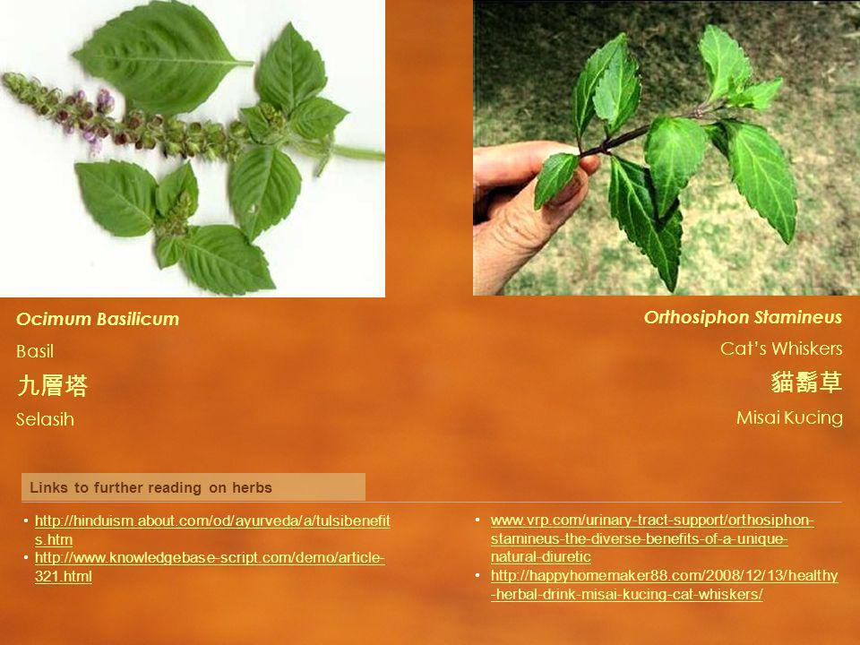 Orthosiphon Stamineus Cats Whiskers Misai Kucing Ocimum Basilicum Basil Selasih Links to further reading on herbs   s.htmhttp://hinduism.about.com/od/ayurveda/a/tulsibenefit s.htm htmlhttp://  321.html   stamineus-the-diverse-benefits-of-a-unique- natural-diureticwww.vrp.com/urinary-tract-support/orthosiphon- stamineus-the-diverse-benefits-of-a-unique- natural-diuretic   -herbal-drink-misai-kucing-cat-whiskers/  -herbal-drink-misai-kucing-cat-whiskers/