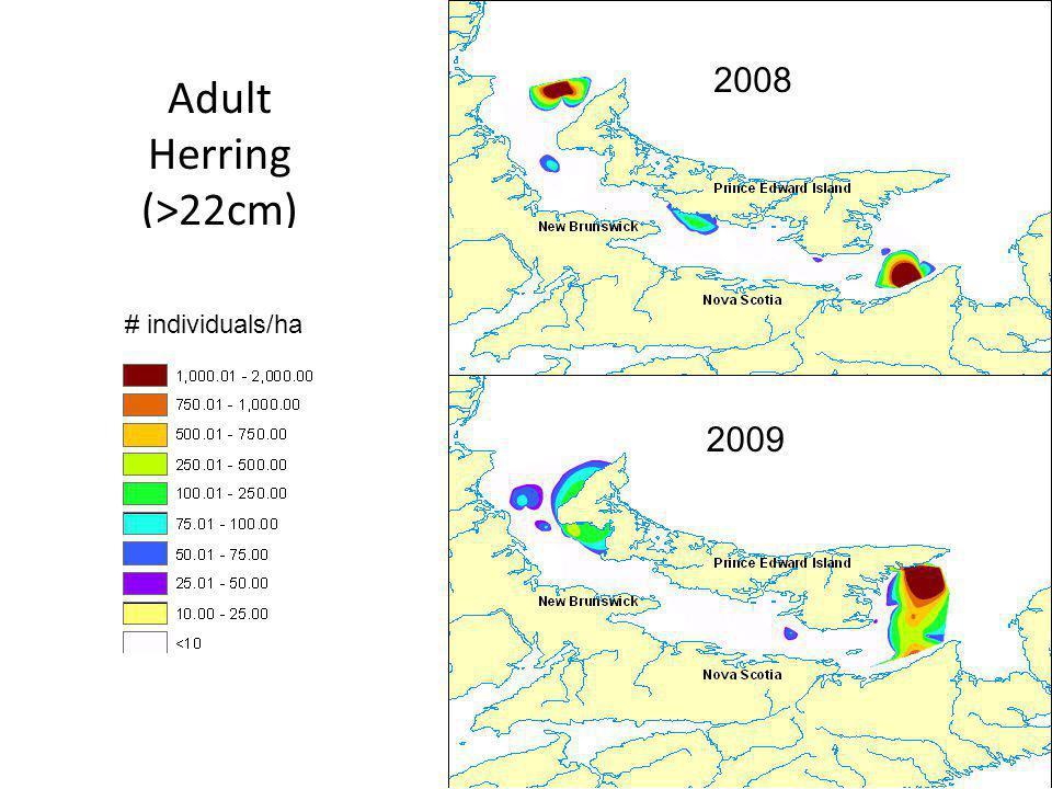 30 Adult Herring (>22cm) 2008 2009 # individuals/ha