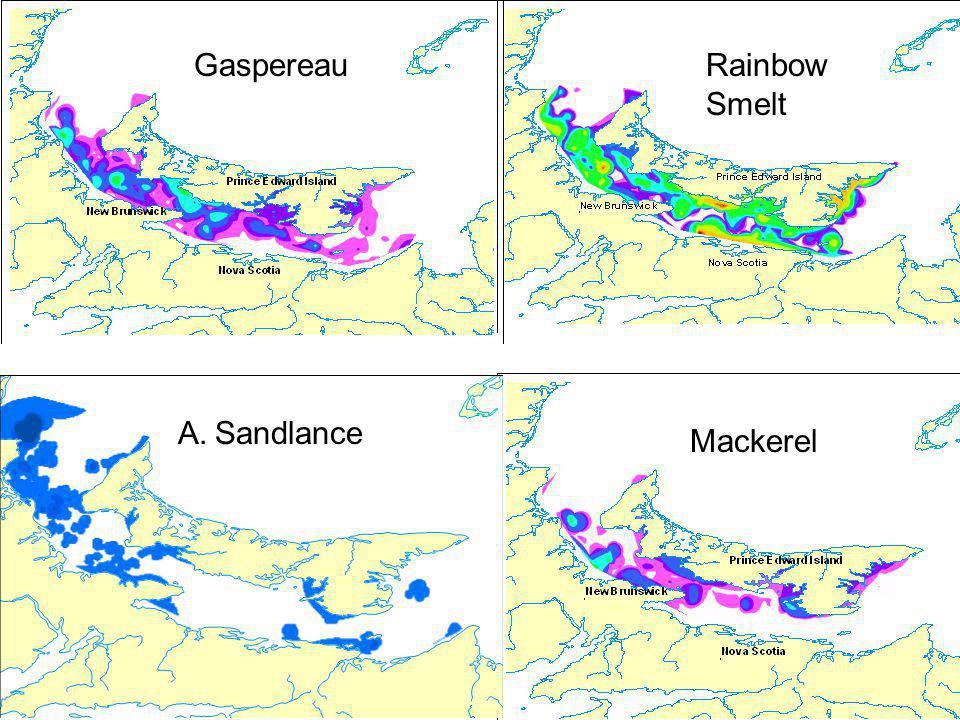 Rainbow Smelt Mackerel A. Sandlance Gaspereau