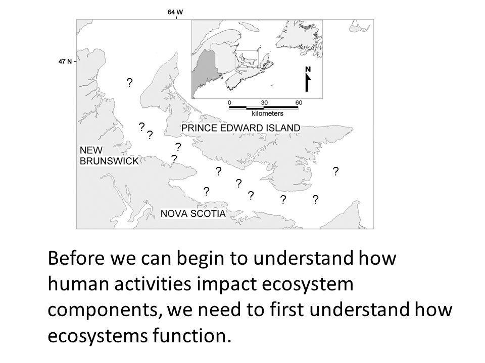 Before we can begin to understand how human activities impact ecosystem components, we need to first understand how ecosystems function.