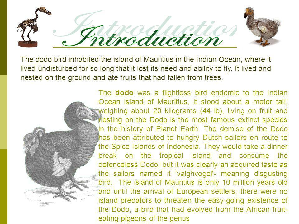 The dodo bird inhabited the island of Mauritius in the Indian Ocean, where it lived undisturbed for so long that it lost its need and ability to fly.