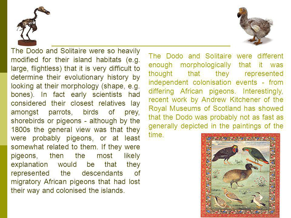 The Dodo and Solitaire were so heavily modified for their island habitats (e.g.