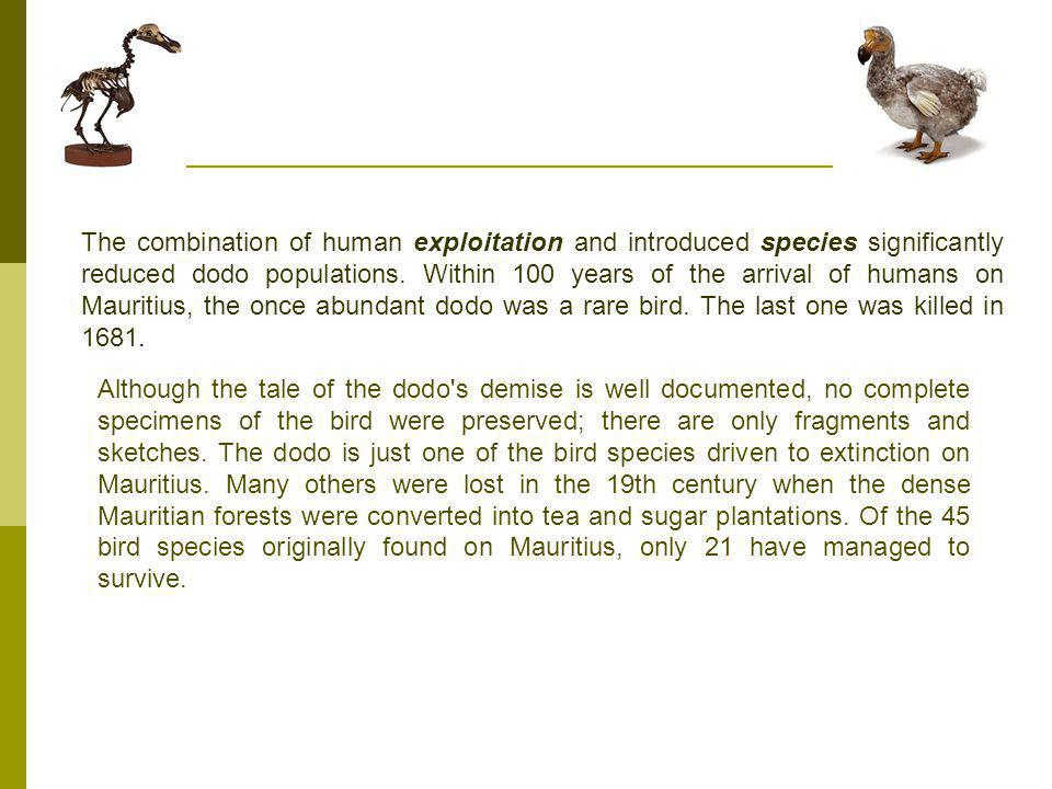 The combination of human exploitation and introduced species significantly reduced dodo populations.