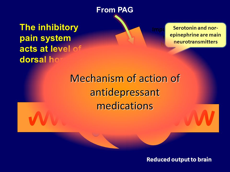 The inhibitory pain system acts at level of dorsal horn Impulses arise in nuclei of brainstem Reduced output to brain Serotonin and nor- epinephrine a