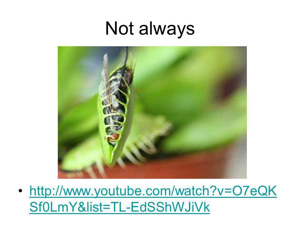 Not always http://www.youtube.com/watch?v=O7eQK Sf0LmY&list=TL-EdSShWJiVkhttp://www.youtube.com/watch?v=O7eQK Sf0LmY&list=TL-EdSShWJiVk