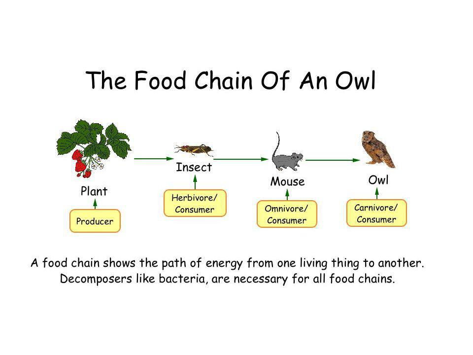 Activity 2 What does a food chain show? What does a food web show?