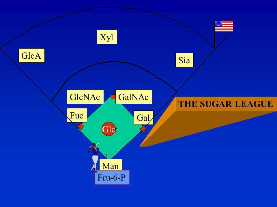 UDP-GlcNAc epimerase/kinase Defective in two human diseases