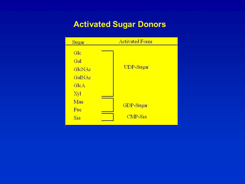 Activated Sugar Donors