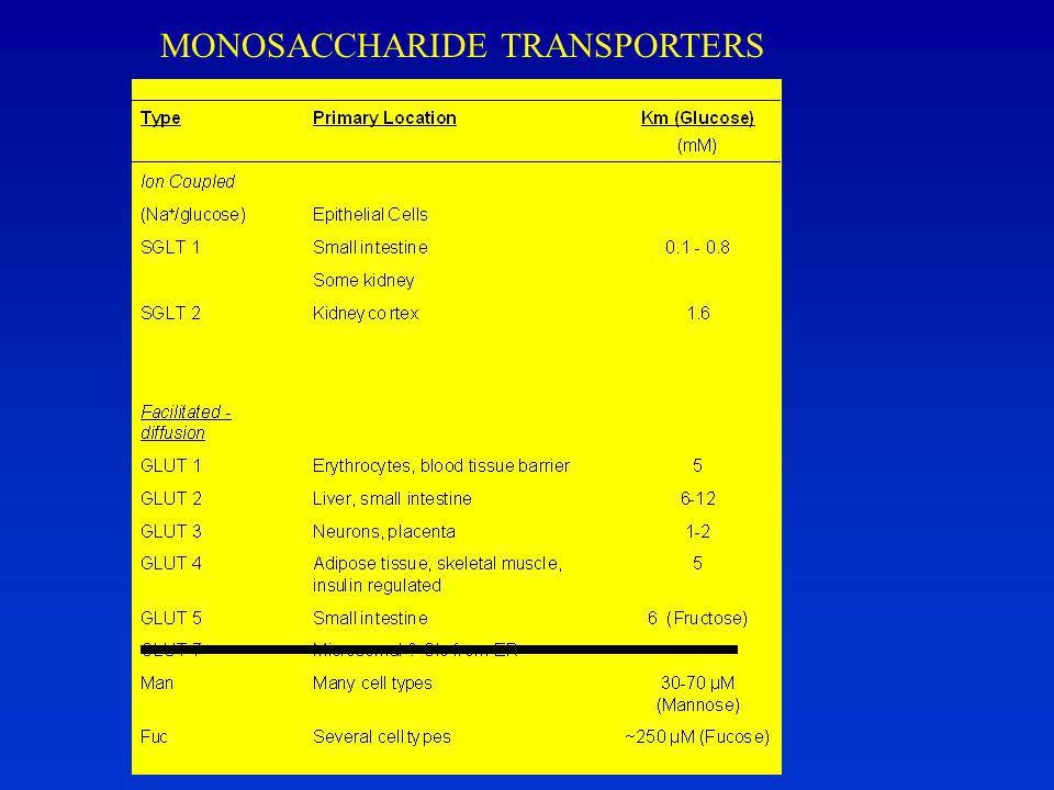 MONOSACCHARIDE TRANSPORTERS