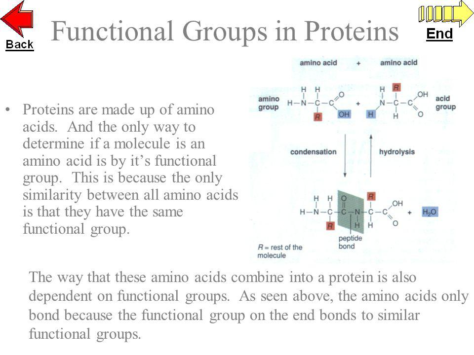 Functional Groups in Proteins Proteins are made up of amino acids. And the only way to determine if a molecule is an amino acid is by its functional g