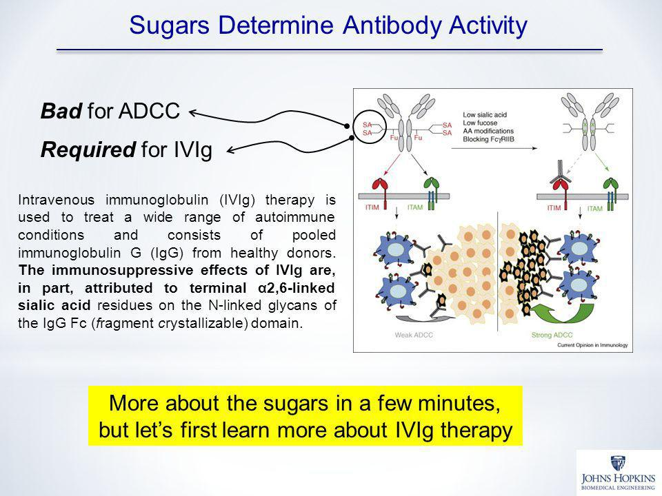Bad for ADCC Required for IVIg Intravenous immunoglobulin (IVIg) therapy is used to treat a wide range of autoimmune conditions and consists of pooled immunoglobulin G (IgG) from healthy donors.
