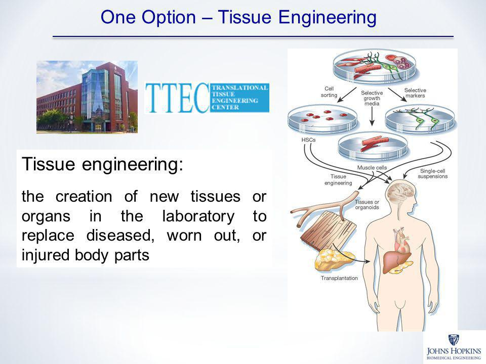 One Option – Tissue Engineering Tissue engineering: the creation of new tissues or organs in the laboratory to replace diseased, worn out, or injured body parts