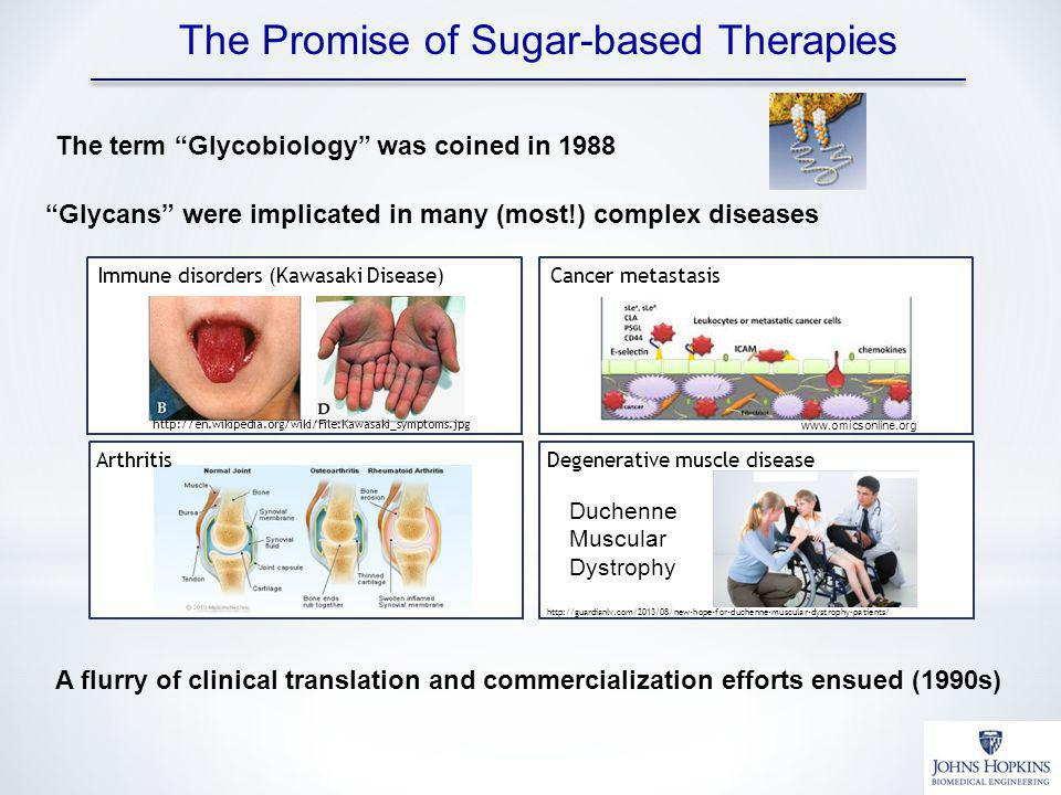 The Promise of Sugar-based Therapies The term Glycobiology was coined in 1988 A flurry of clinical translation and commercialization efforts ensued (1990s) Glycans were implicated in many (most!) complex diseases Arthritis Cancer metastasis www.omicsonline.org Immune disorders (Kawasaki Disease) http://en.wikipedia.org/wiki/File:Kawasaki_symptoms.jpg Degenerative muscle disease http://guardianlv.com/2013/08/new-hope-for-duchenne-muscular-dystrophy-patients/ Duchenne Muscular Dystrophy Arthritis