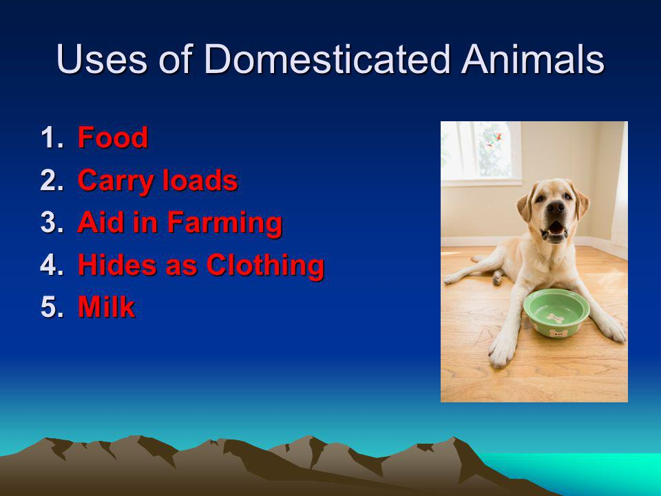 Uses of Domesticated Animals 1.Food 2.Carry loads 3.Aid in Farming 4.Hides as Clothing 5.Milk