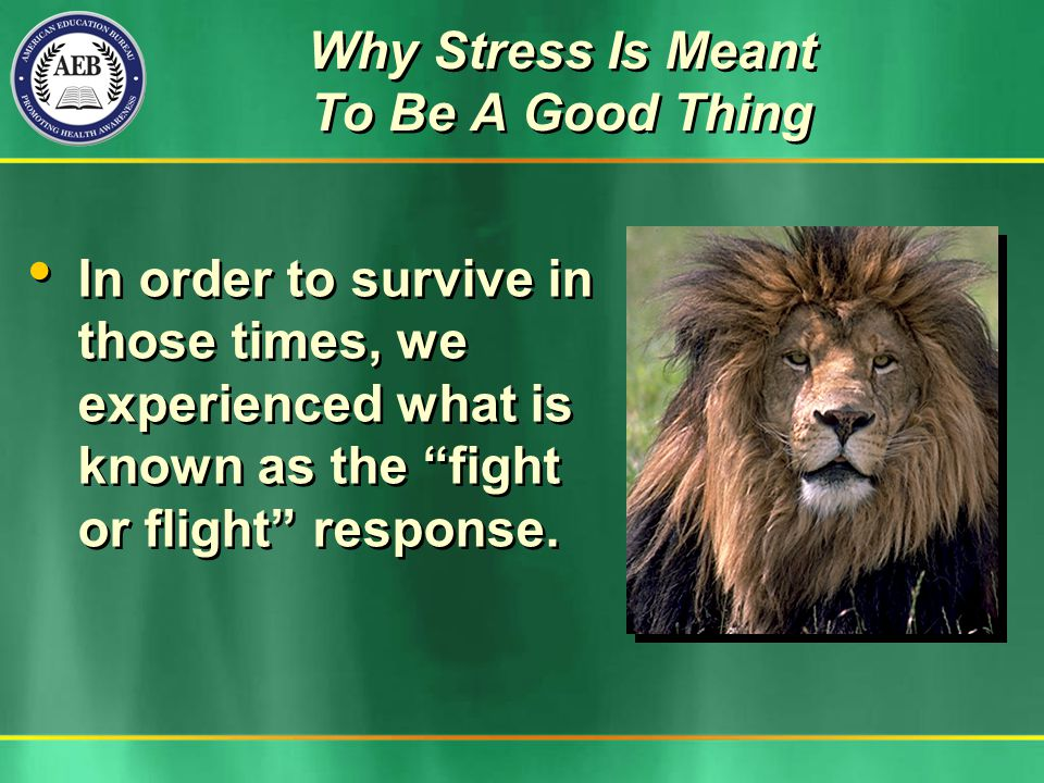 Why Stress Is Meant To Be A Good Thing In order to survive in those times, we experienced what is known as the fight or flight response.