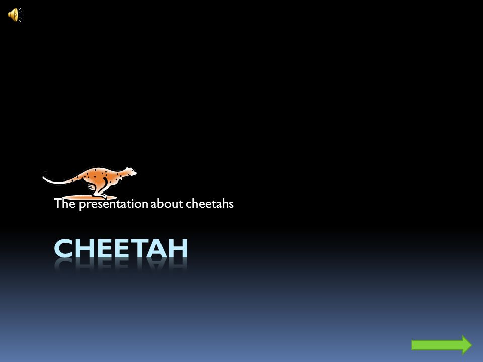 The presentation about cheetahs