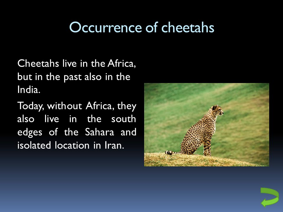 Occurrence of cheetahs Cheetahs live in the Africa, but in the past also in the India.