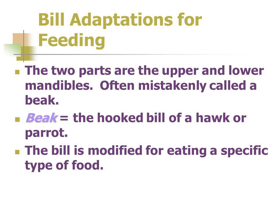Bill Adaptations for Feeding The two parts are the upper and lower mandibles.