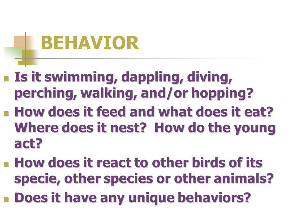 BEHAVIOR Is it swimming, dappling, diving, perching, walking, and/or hopping? Is it swimming, dappling, diving, perching, walking, and/or hopping? How