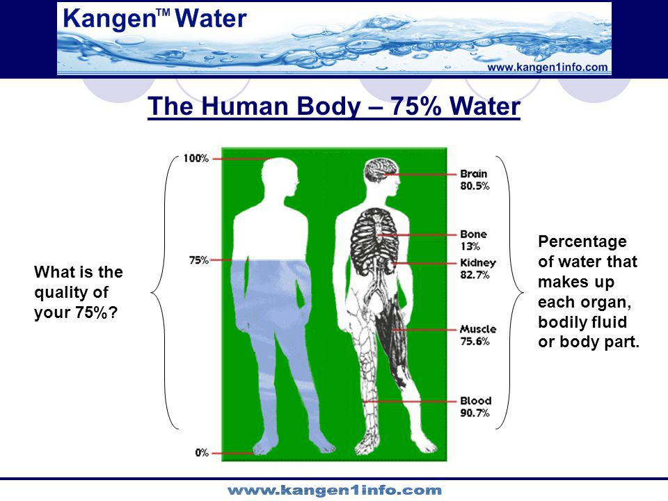 The Human Body – 75% Water Percentage of water that makes up each organ, bodily fluid or body part. What is the quality of your 75%?