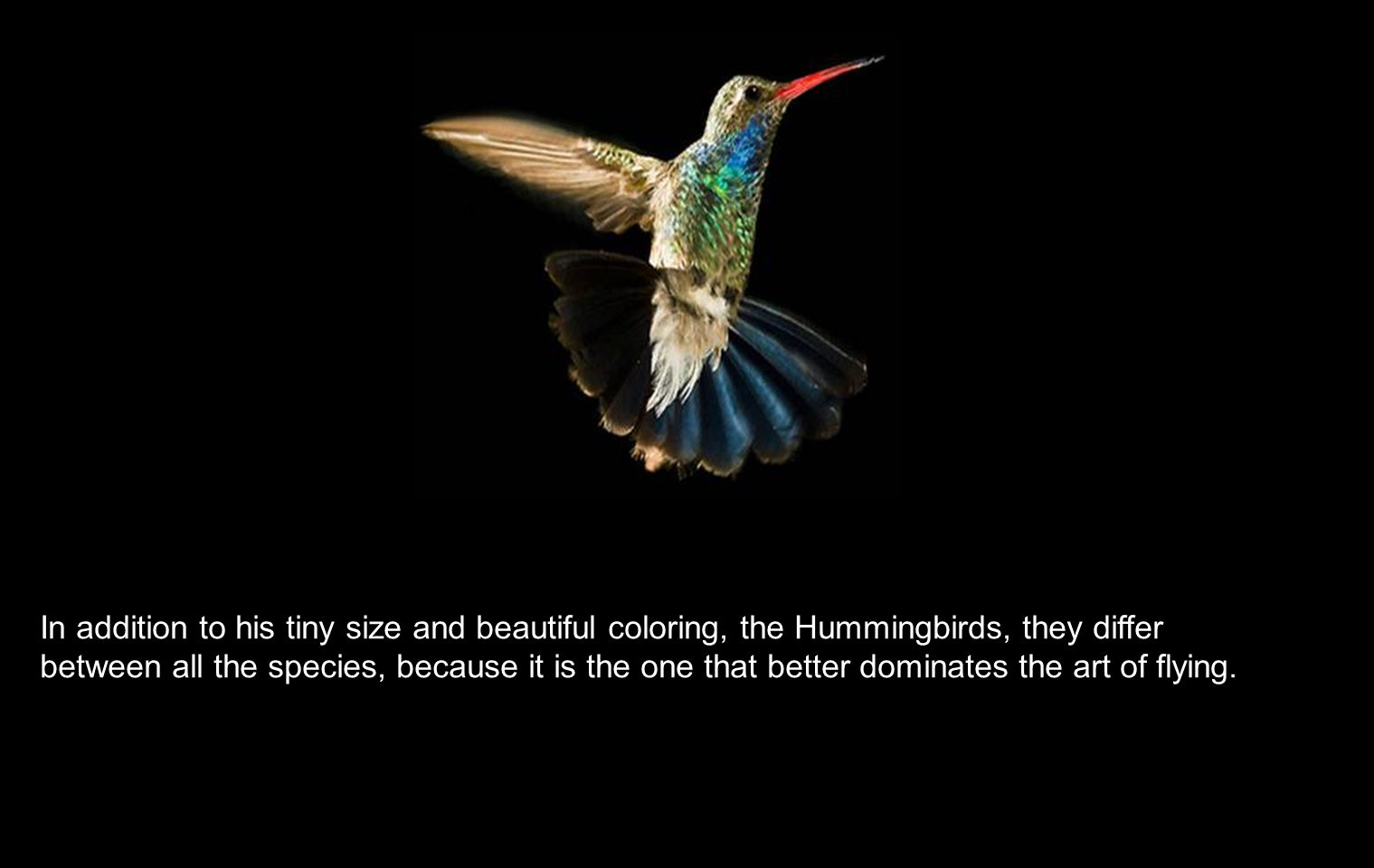 Every peak represents a specialization to a certain type of Flower, which allows to the hummingbird in question, to occupy a particular ecological niche and thus to avoid the struggle with other species