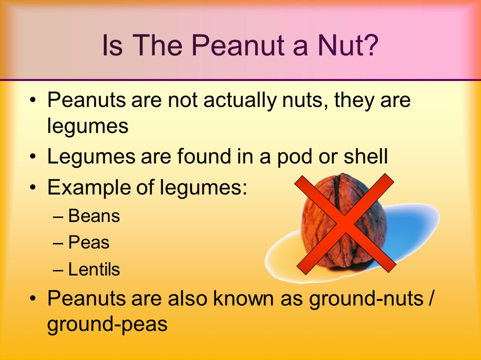 Is The Peanut a Nut.