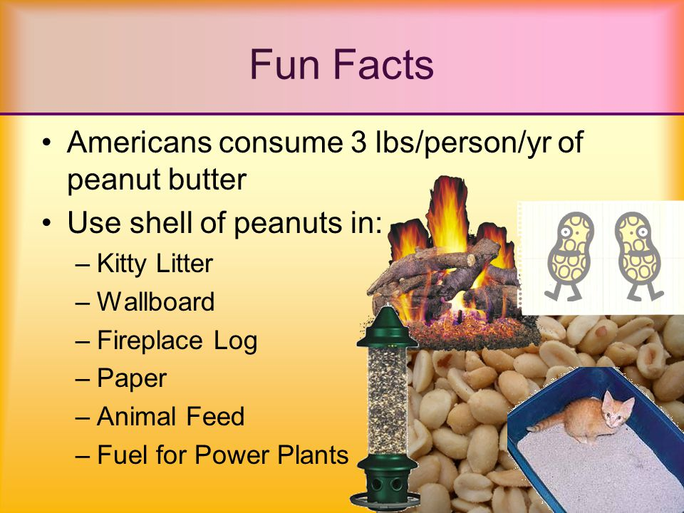 Fun Facts 2 peanut farmers elected as U.S.