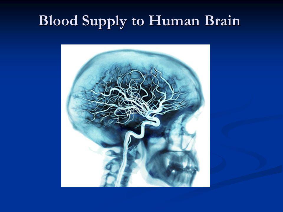 Blood Supply to Human Brain