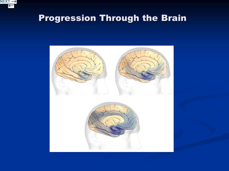 Progression Through the Brain
