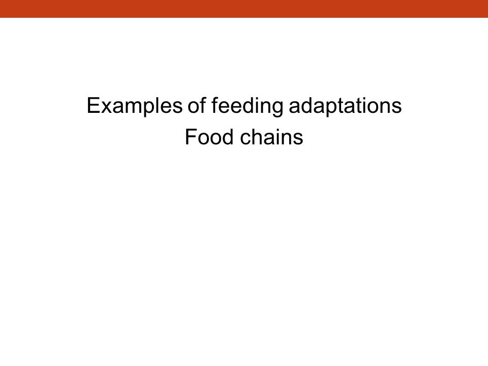 Feeding Examples of feeding adaptations Food chains